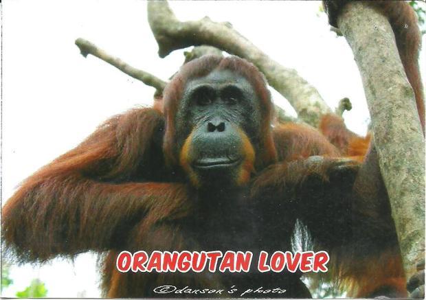 Orang Utan Lover. Photo by Danson, (Unknown). Tertanggal 05 Juni 2015. Terima kasih Salimah,
